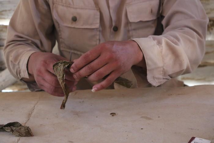 Préparation des feuilles