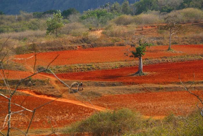 Les terres rouges des Mogotes